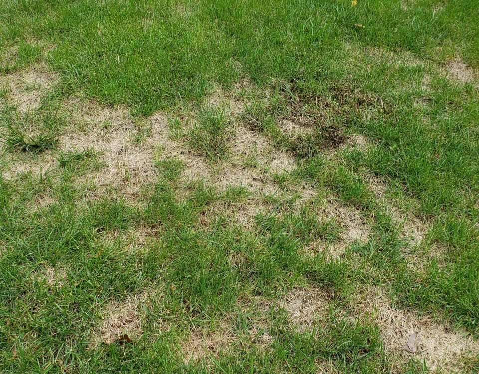 dead patches in lawn